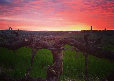 Barossa sunset bare vines